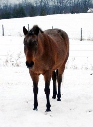 jessie-in-snow